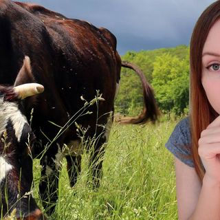 My Diet, Veganism, the Ethics of Animal Killing and More | Simona Rich