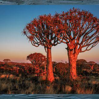 #007 Durch die Wildnis Südafrikas und Namibias