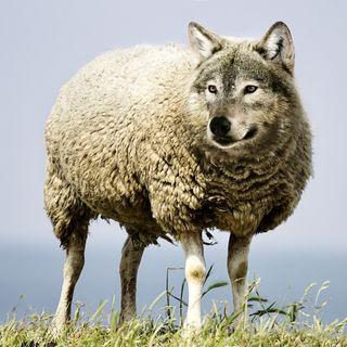 Prohibido prohibir: la protección del lobo #74
