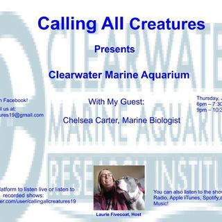 Calling All Creatures Presents Clearwater Marine Aquarium