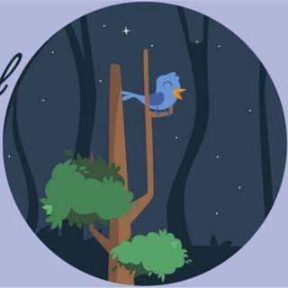 Il caurabesul che gridava nel bosco