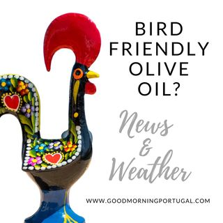 A Campaign for Bird-friendly Olive Oil?