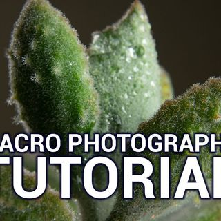 Hands-On Photography 48: Getting Really Close Photos
