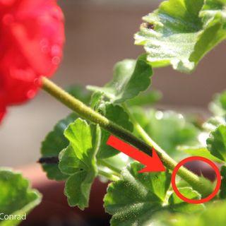 78: Deadheading Your Plants w/ Clean Green Living's Cloud Conrad