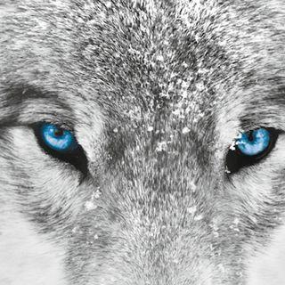 La saggezza dei lupi. La mia vita con il branco.