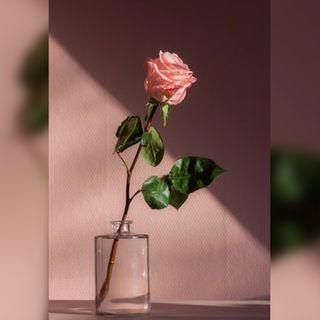84: Rose