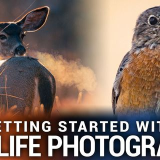 Hands-On Photography 101: Getting Started With Wildlife Photography