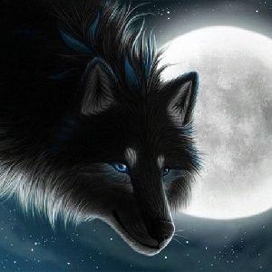 BLACK WOLF... El aullido del Lobo Negro.