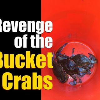 The Revenge of the Bucket Crabs – Holding Your Mindset Back?