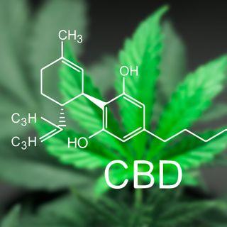 Cómo incursionar en el negocio del cannabis. Historia, mitos y respuestas #194