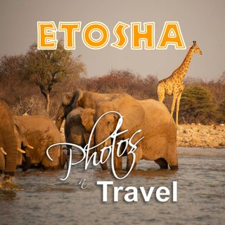 photosNtravel - Etosha, Wildife of the Kalahari - May, 2020