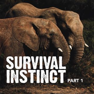 Survival Instinct: Part 1 - Pr Andy Yeoh