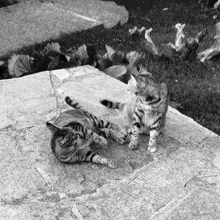 Gatti a caccia