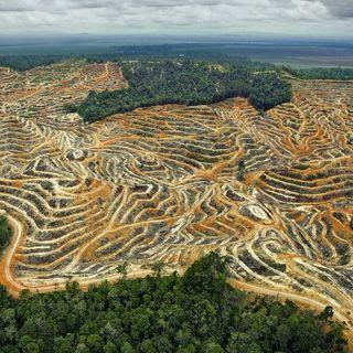 Endangered - Quanti alberi ci sono nel mondo?