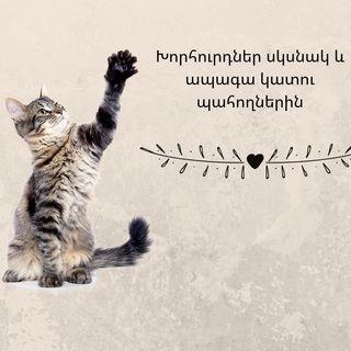 Խորհուրդներ սկսնակ և ապագա կատու պահողներին