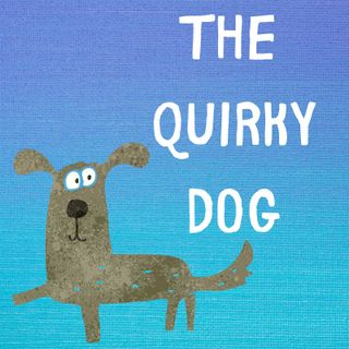 The Quirky Dog