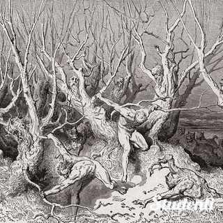 Letteratura - Dante Alighieri, Divina Commedia. Il Canto XIII dell'Inferno