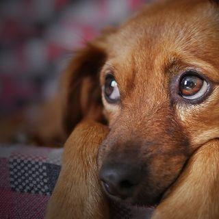 ¿Cómo tranquilizar a tu perro cuando hay pirotecnia?