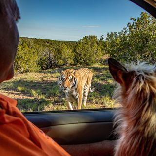 Steve Winter – The Real Tiger King
