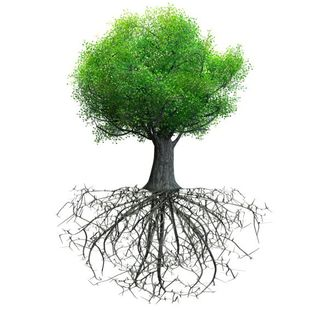 From The Roots Of A Tree