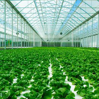 Così la tecnologia aiuta l'agricoltura a risparmiare acqua