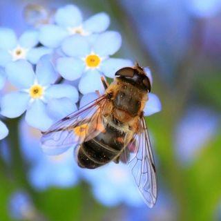 Le api se ne fregano del Covid? - con GIORGIO POETA - 20 maggio 2020