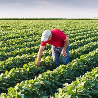 Ep 111: No Farms, No Food