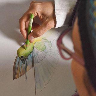 NUESTRO OXÍGENO Turismo ecológico y aves - Fotografía de aves-emprendimiento