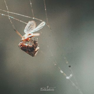 Dal grande manuale di entomologia notturna