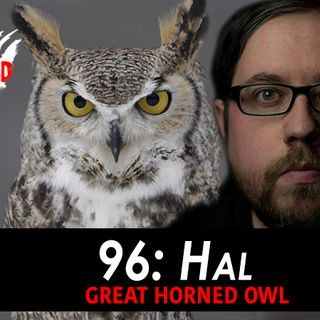 96 - Hal the Horned Owl