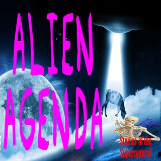 Alien Agenda | Interview with Peter Robbins | Podcast
