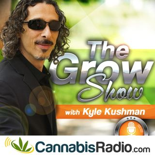 Dr. Mitch Earleywine of CannbisRadio.com