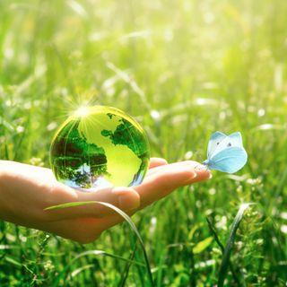 Da solastalgia a mottainai: i neologismi green