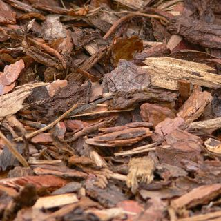 DIY GM Ep119 Alternatives to Beauty Bark as Mulch