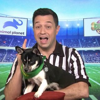 Dan Schachner Ref For The Puppy Bowl Super Bowl 54
