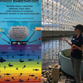 episode_11__biosphere_2___rainforests_and_oceans_in_the_desert___fossel_fuel_90_percent_waste_reduction_in_1_year__everythings_connected
