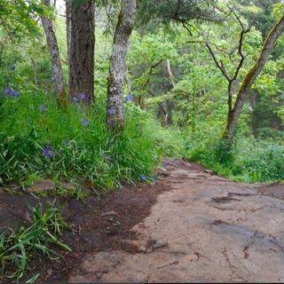 Zone 4 downhill!