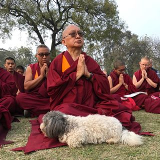 Kyabje Lama Rinpoche Cenrezig Institute
