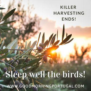 """Portugal news, weather & 'Casa do Dia' - """"Sleep well the birds!"""""""