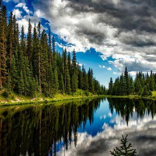 Quanti alberi ci sono nel mondo?