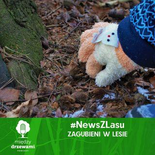 News z lasu - Zagubieni w lesie