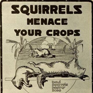 386 - The War on Squirrels