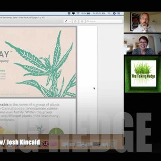 PITCH DECK REVIEW~ a cannabis company in Japan (2019)