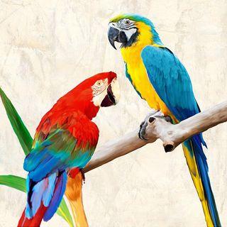 Il pappagallo di Paul Valéry