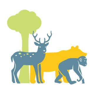 2. Gli amici della foresta sono in pericolo