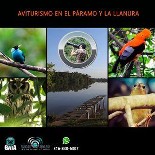 NUESTRO OXÍGENO Aviturismo en el páramo y la llanura - Roggers Palacios Oliveros