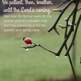 Bible Study Exercise: Patience