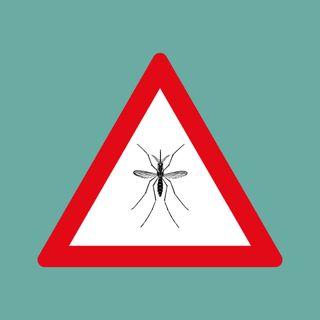 Episodio 22: Zanzare geneticamente modificate