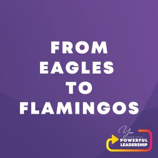 Episode 5: From Eagles to Flamingos