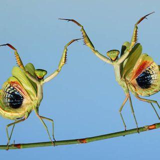 Bug Dance On The Island In The Sea